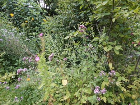 Blick in meinen naturnahen Garten