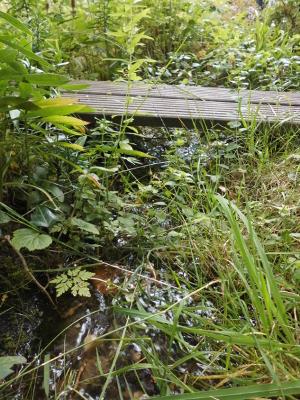 Der Wassergraben im naturnahen Garten