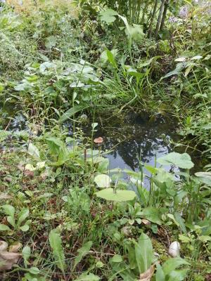 Wassergraben im naturnahen Garten