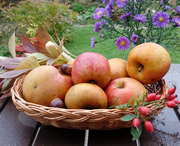 Boskobäpfel in einem Korb