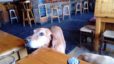 Hund O`Sullivans Barr Crookhaven