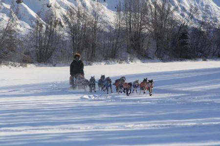 Hundeschlitten beim Yukon Quest