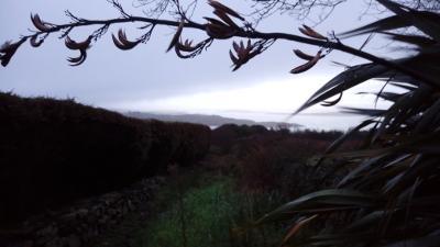 Sonnenaufgang, Schull, Irland