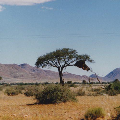 namibia_vogelnest