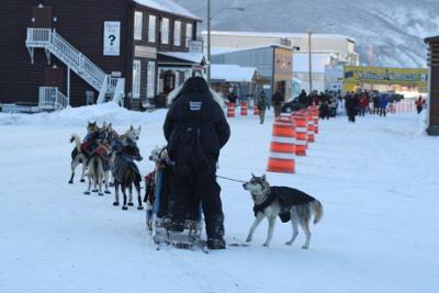 Hundeschlitten in Dawson City