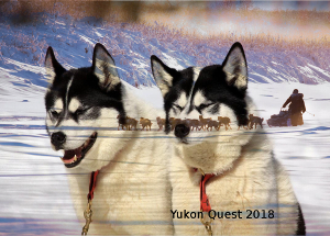 Yukon Quest
