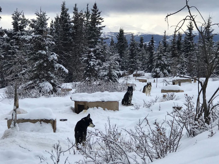 Dog Yard, Lake Laberge