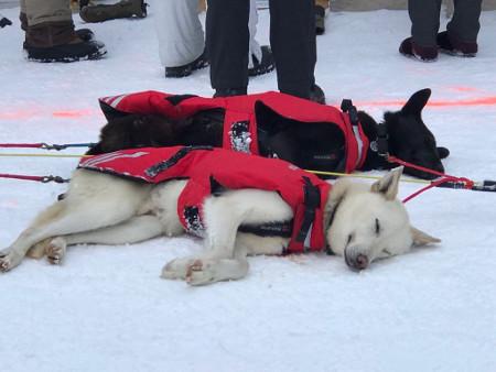 Hunde von Matt Hall am Ziel