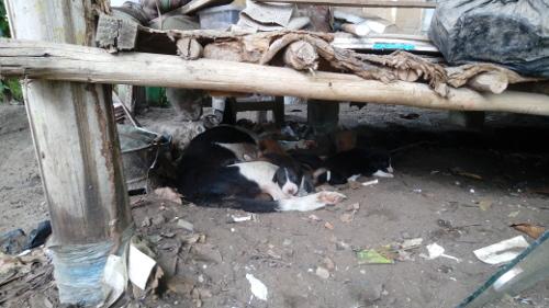 Eazy`s Place, Hostel in Dar es Salaam, Hunde