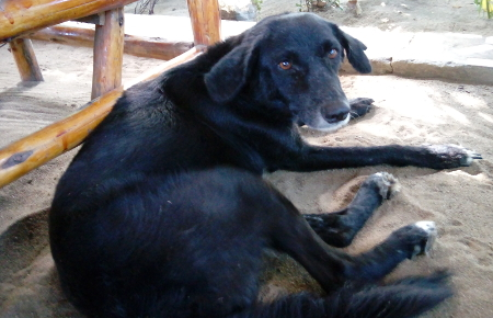 Wachhund Hostel Eazy`s Place, Dar es Salaam