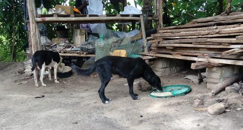 Wachhunde auf Eazy`s Place; Dar es Salaam