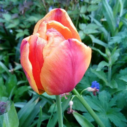 tuple_gelb_orange_einzeln_fb