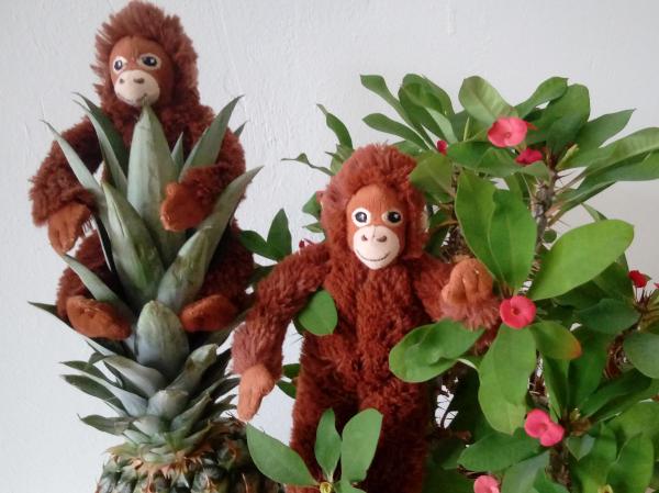 Orang-Utan Kindergeschichte - Palmöl